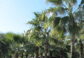 All Inclusive Urlaub in Antalya